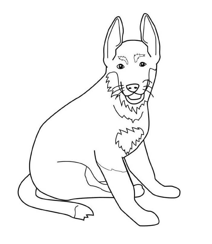 German Shepherd 6