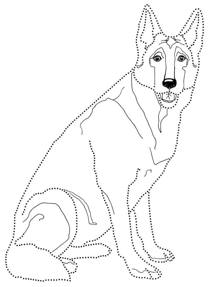 German Shepherd 9