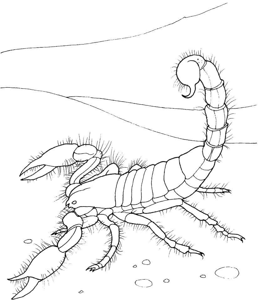 Giant Desert Scorpion