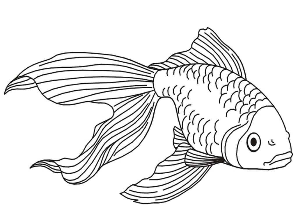 Goldfish 2