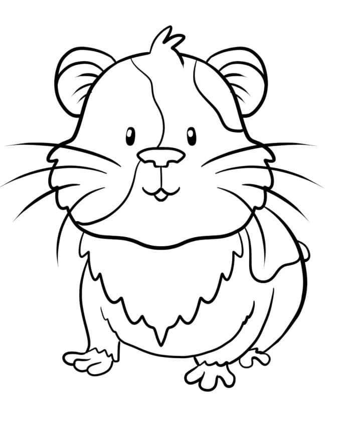 Guinea Pig 3
