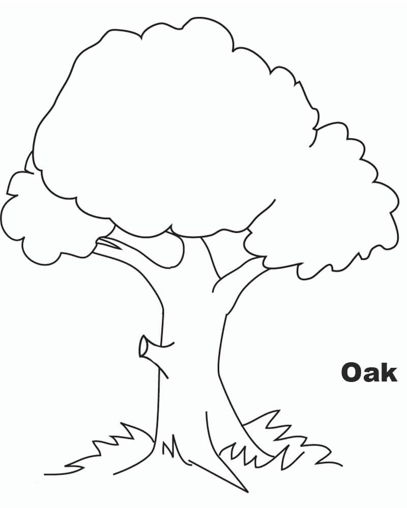 HD Oak Tree Image