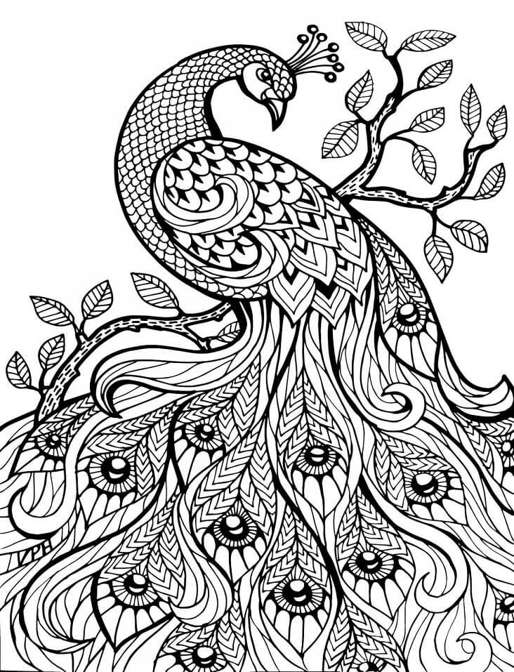 Hard Peacock