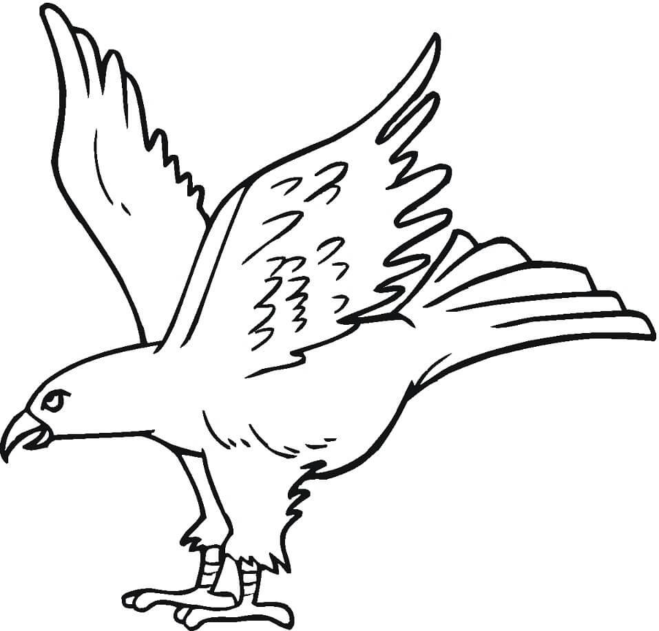 Hawk 5