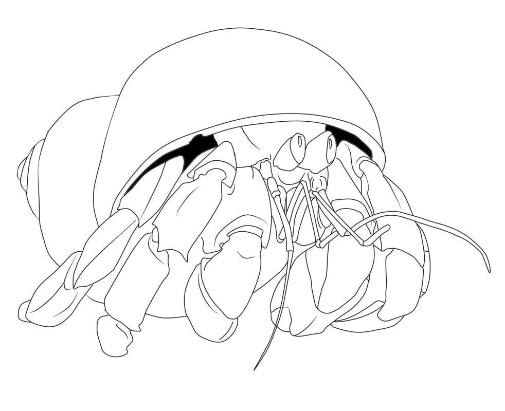 Hermit Crab 1