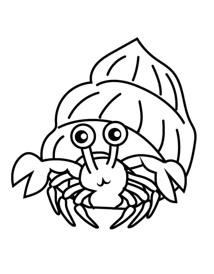 Hermit Crab 11