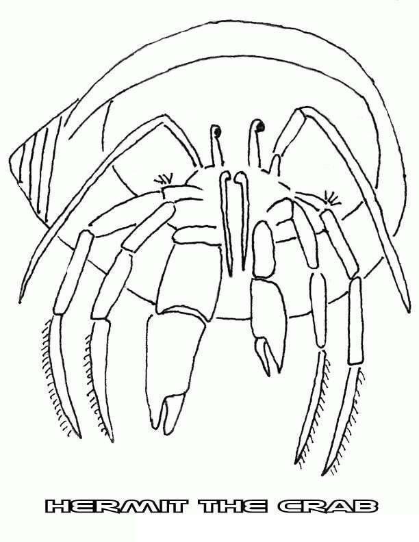 Hermit Crab 3