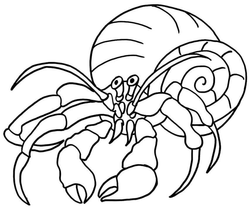 Hermit Crab 4