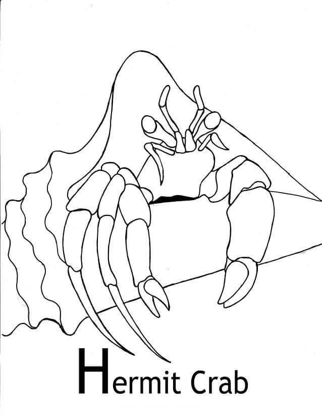 Hermit Crab 8
