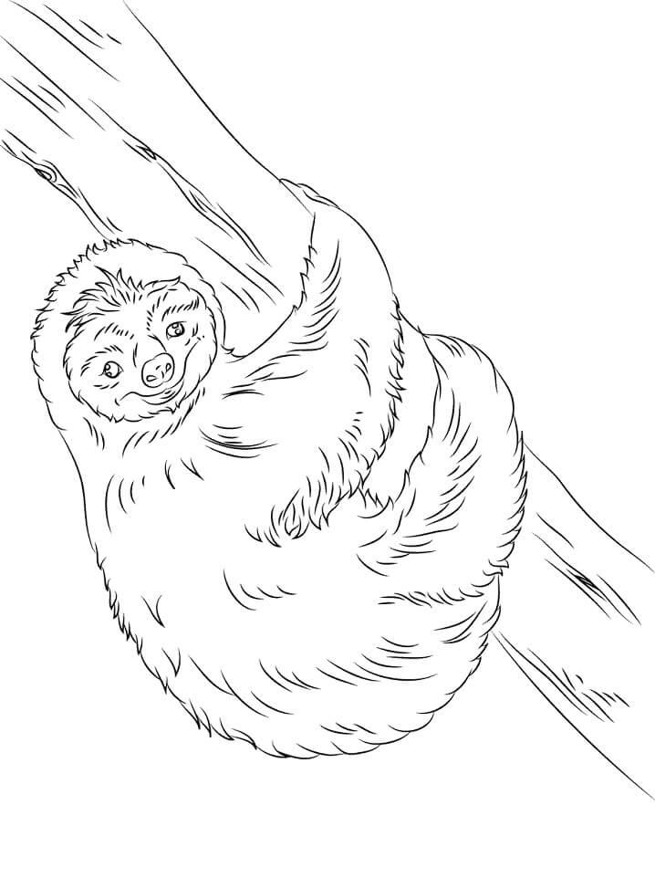 Hppy Sloth