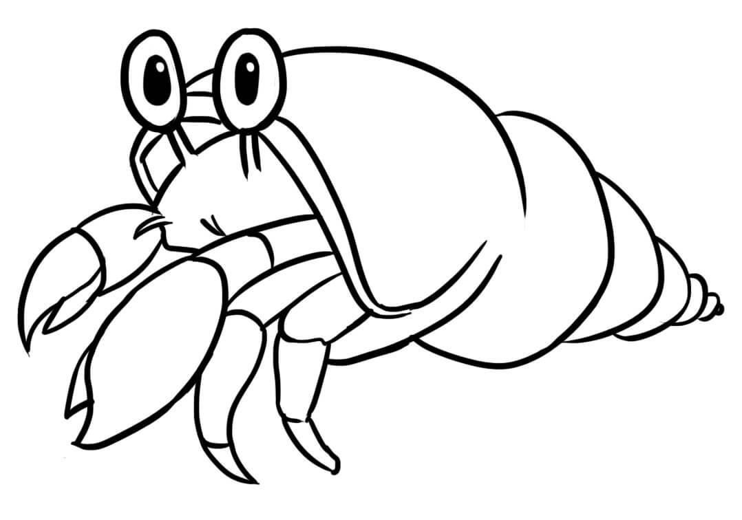 Little Cute Hermit Crab