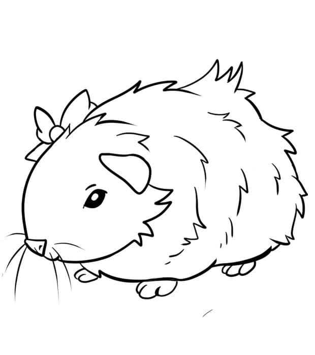 Loveable Guinea Pig