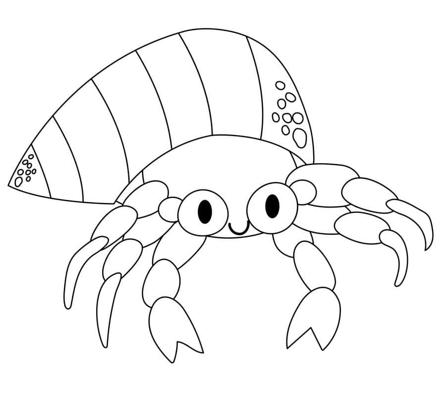 Lovely Hermit Crab