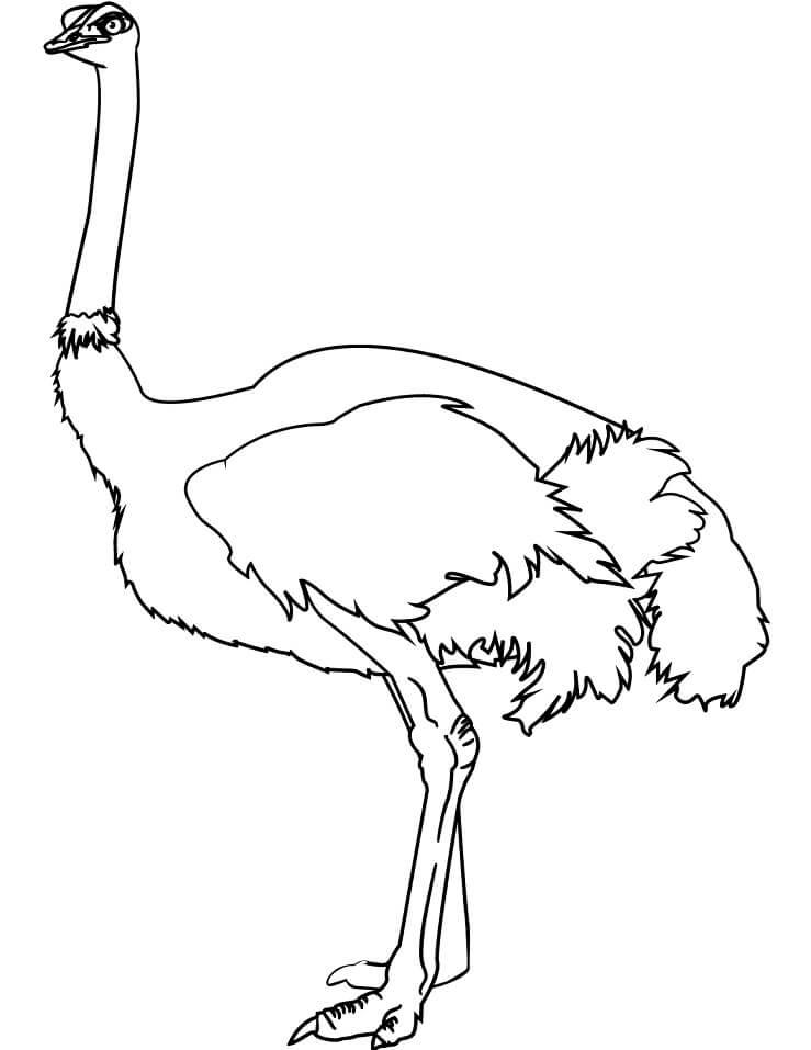 Normal Ostrich
