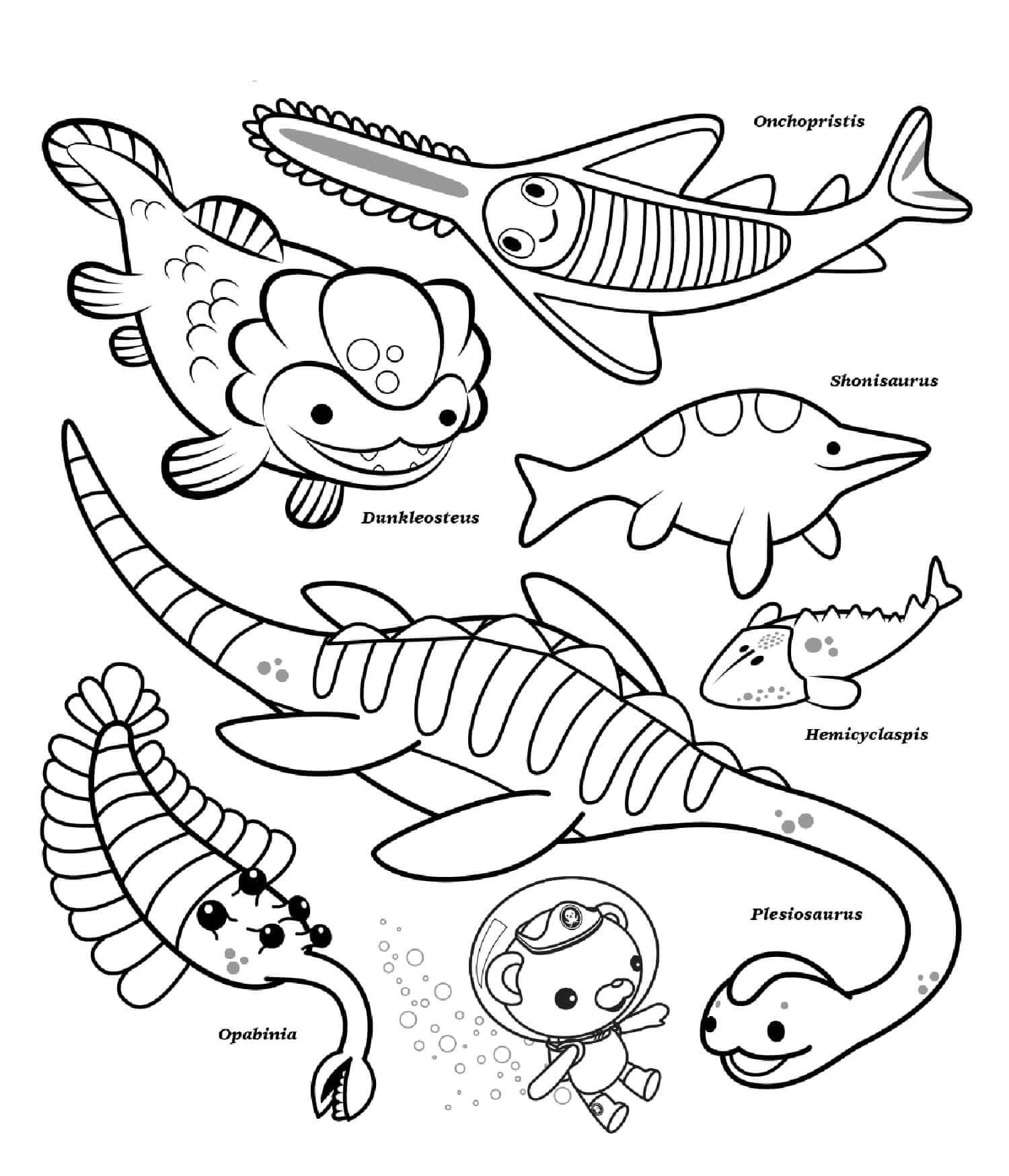 Octonauts Ocean Creatures
