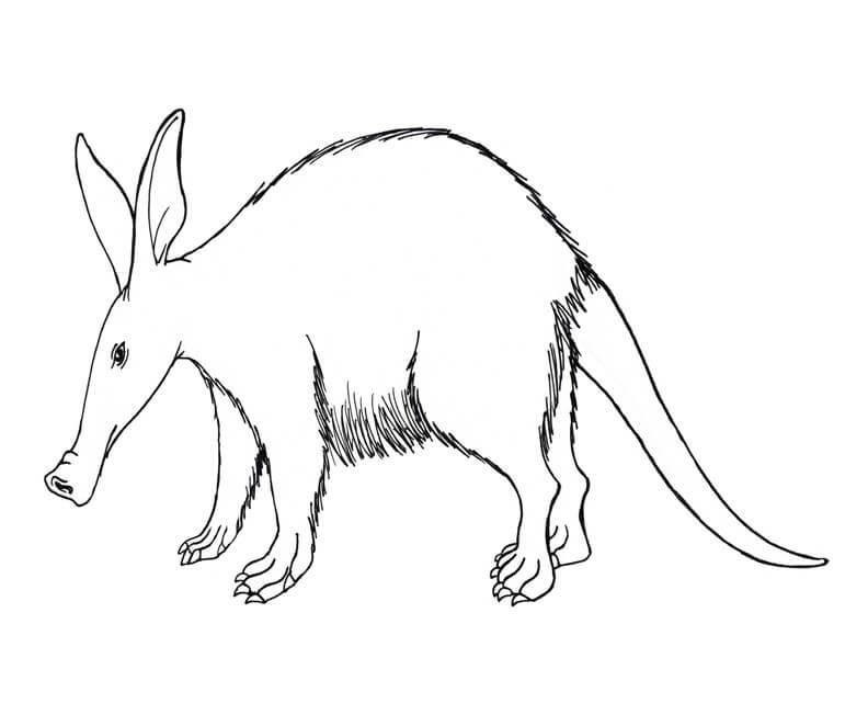 One Aardvark