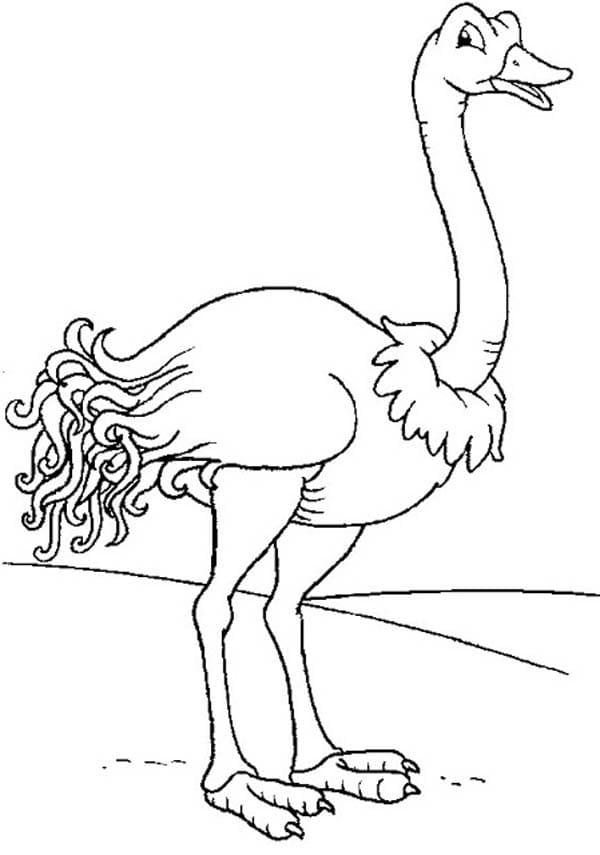 Ostrich 7