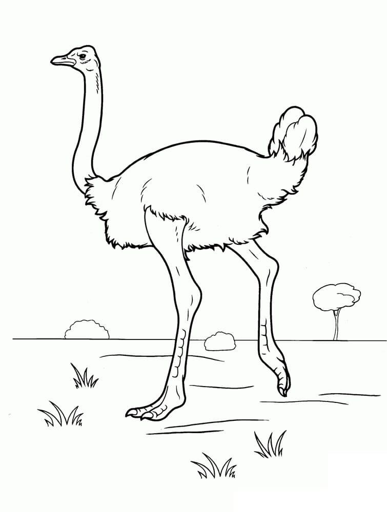 Ostrich 9