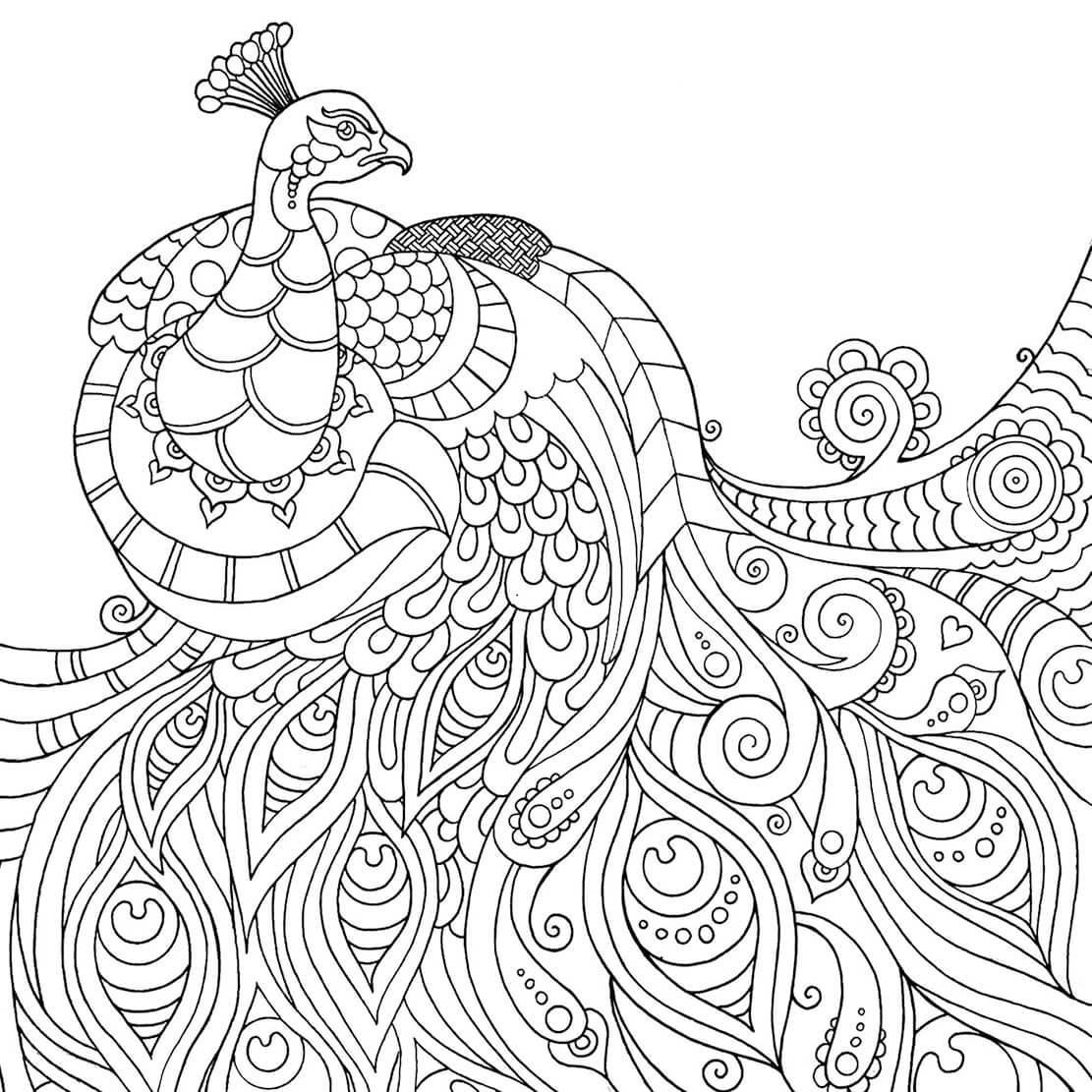 Peacock Mindfulness