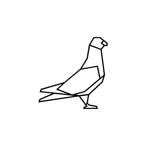 Pigeon 12