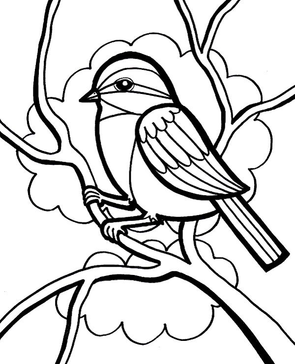 Pigeon 15