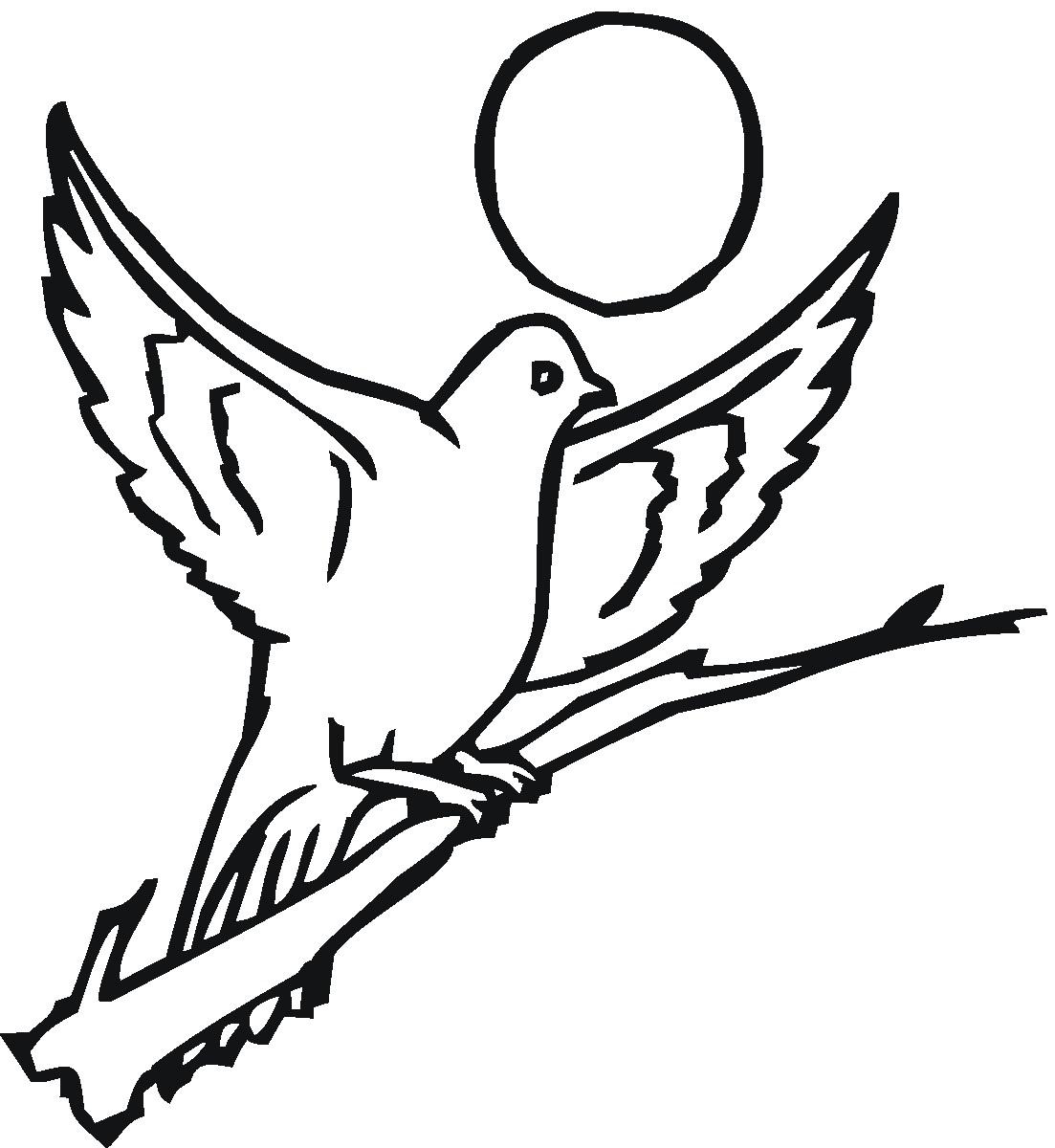 Pigeon 17