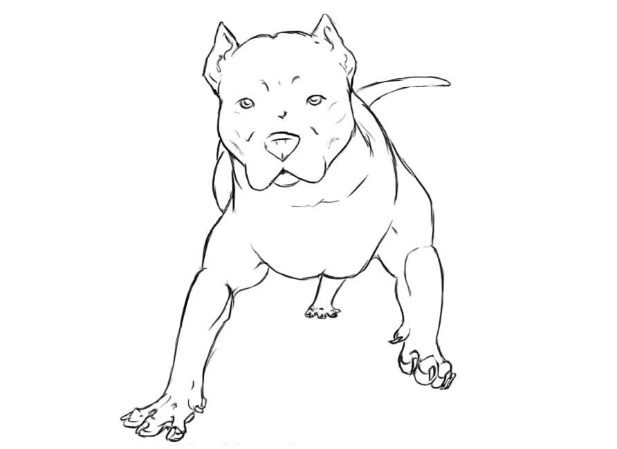 Pitbull Dog 1