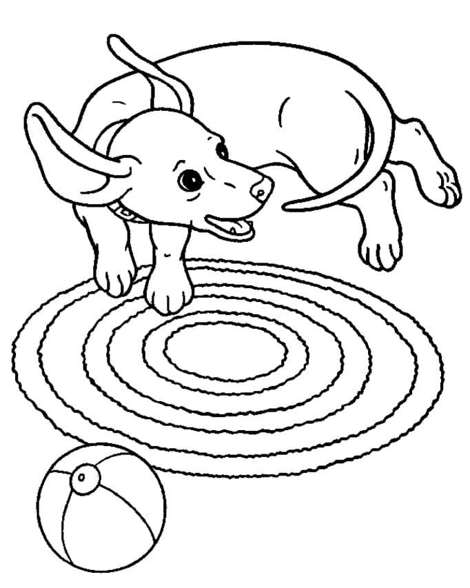 Playful Dachshund