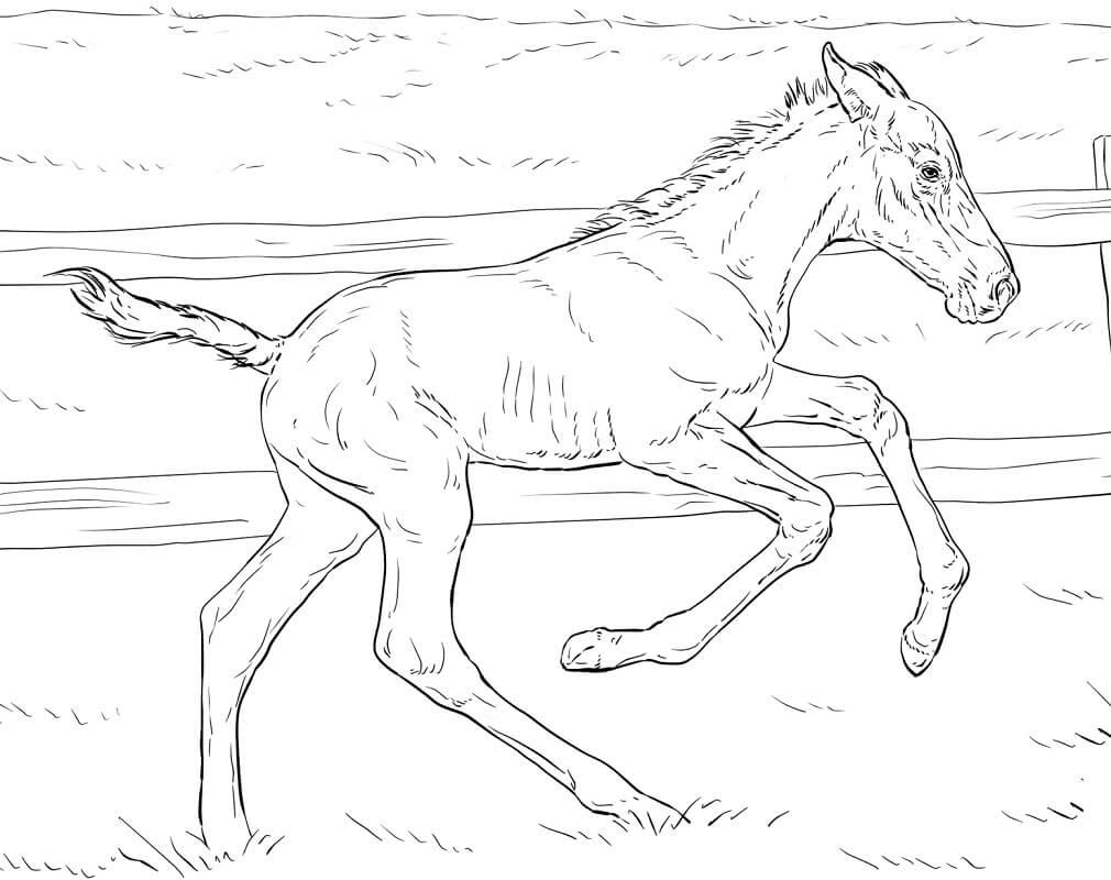 Realistic Bucking Foal
