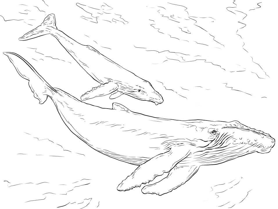 Realistic Humpback Whales