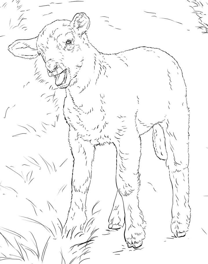 Realistic Lamb