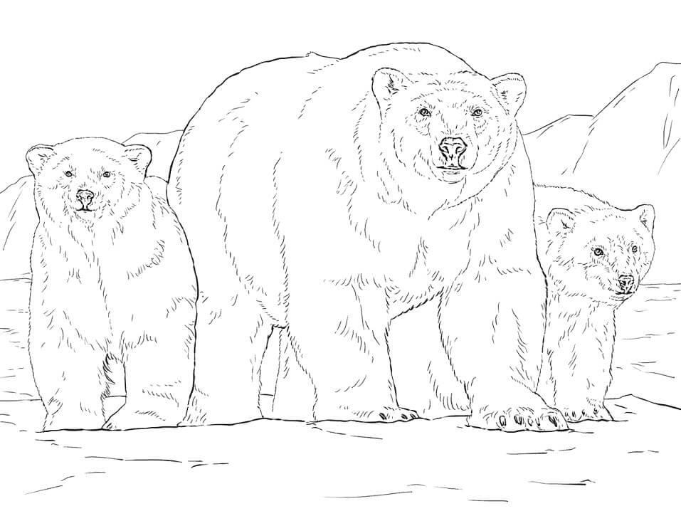 Realistic Polar Bears