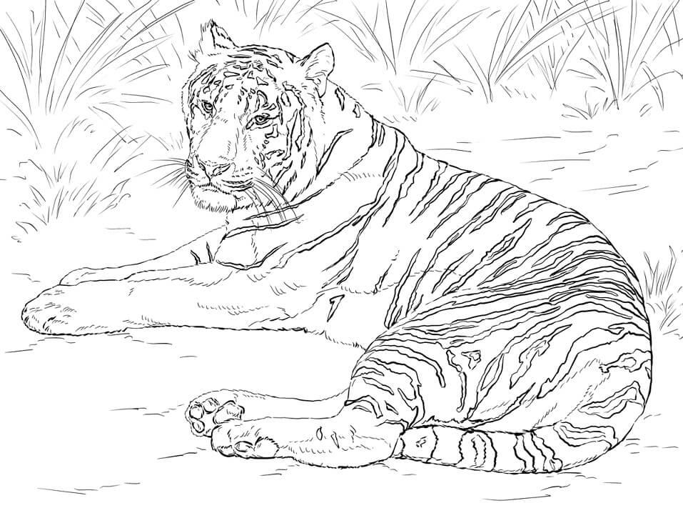 Realistic Siberian Tiger