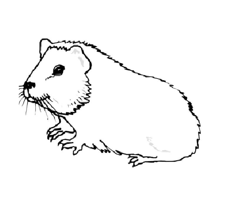 Simple Guinea Pig