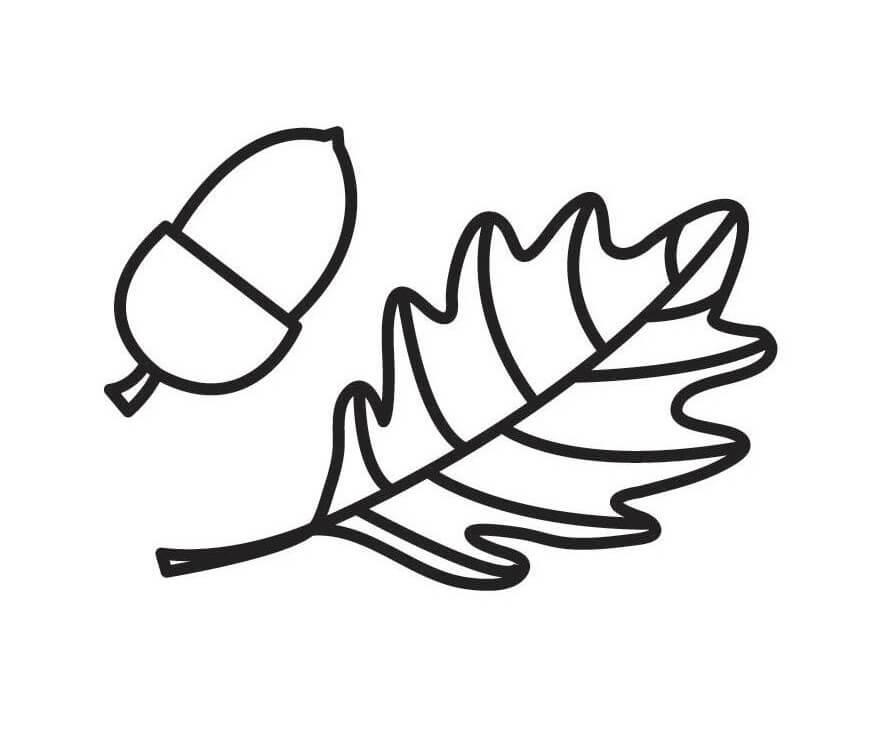 Simple Leaf and Acorn