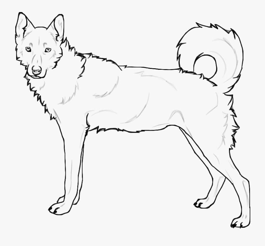 Standing Siberian Husky