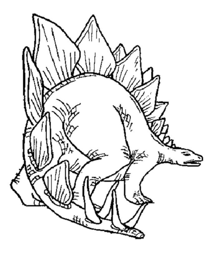 Stegosaurus 5