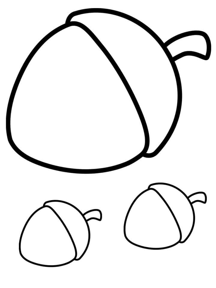 Three Acorns