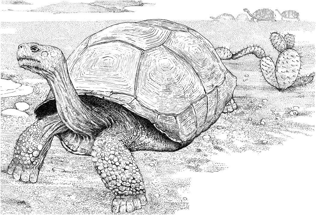 Tortoise in a Desert
