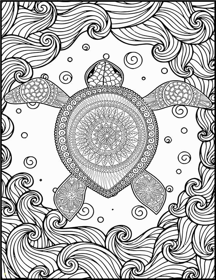 Turtle Hard
