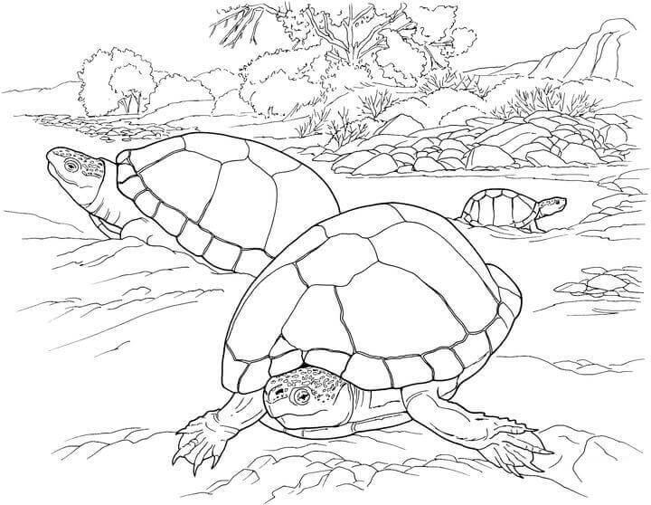Turtles In The Desert