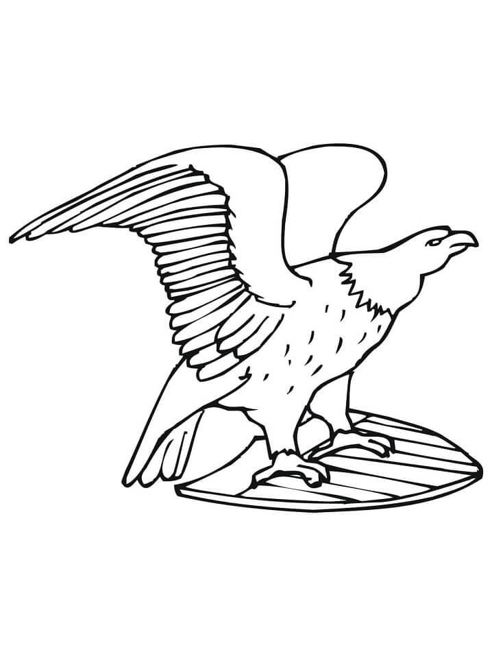 US Bald Eagle