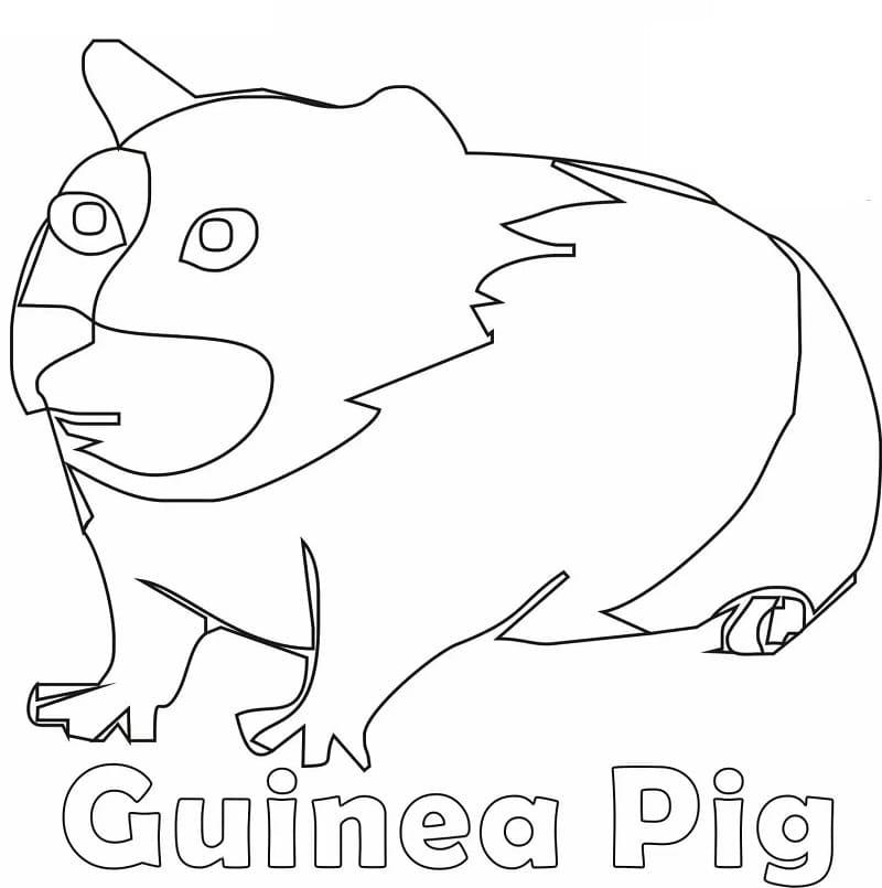 Ugly Guinea Pig