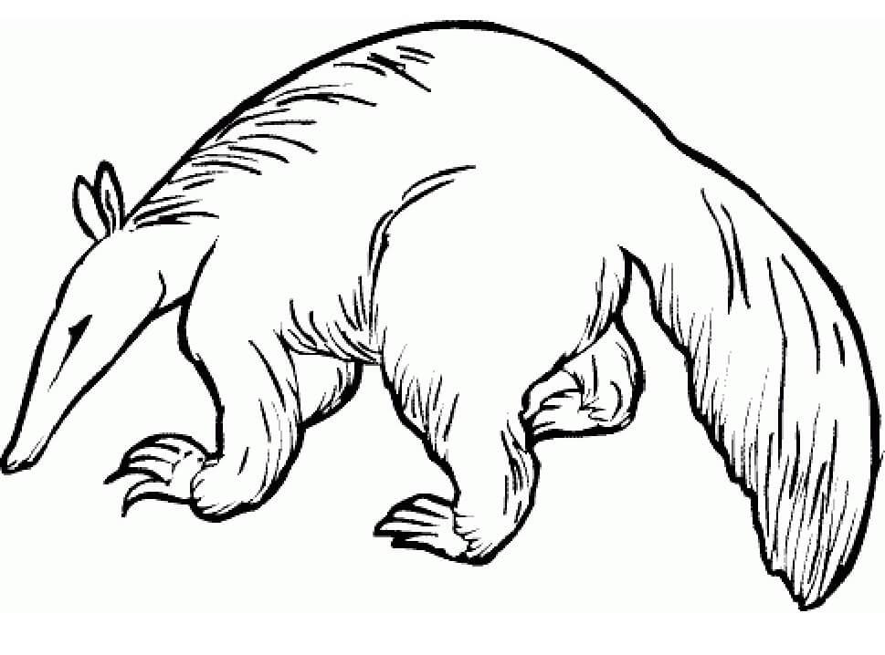 Wild Aardvark
