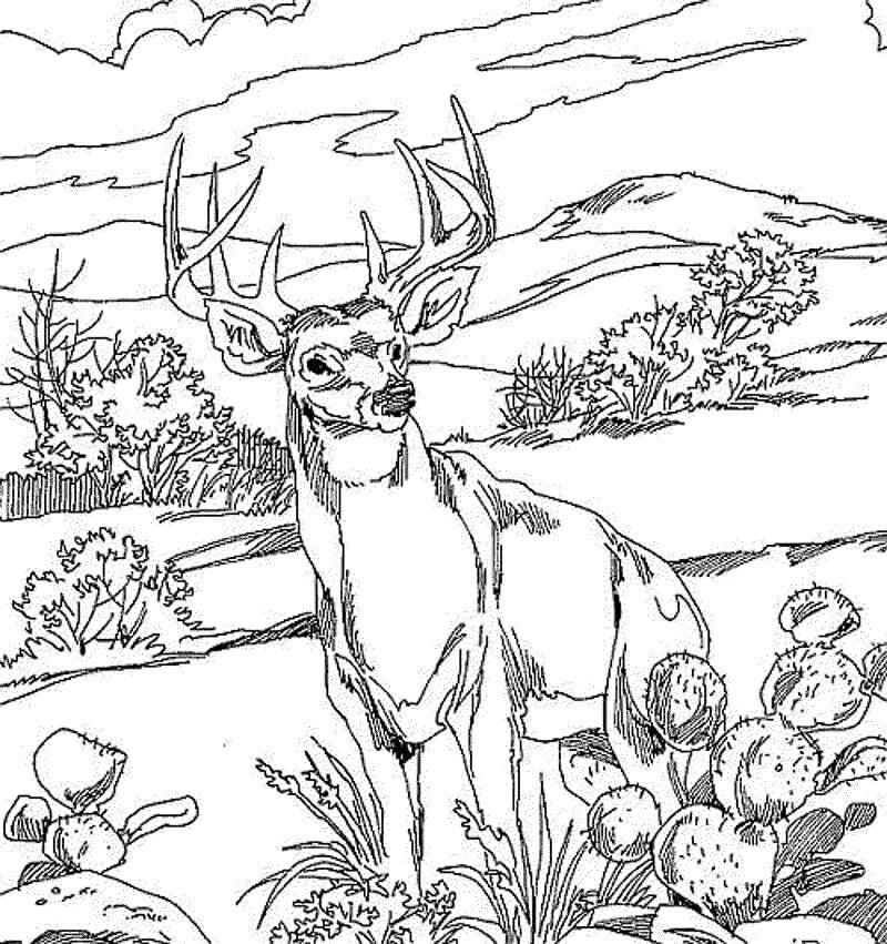 Wild Deer 2