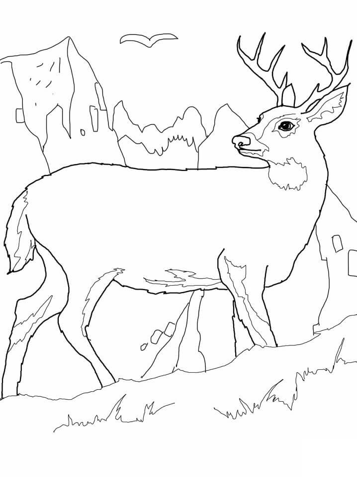 Wild Deer 3