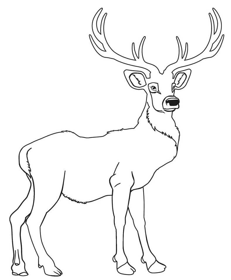 Wild Deer 4