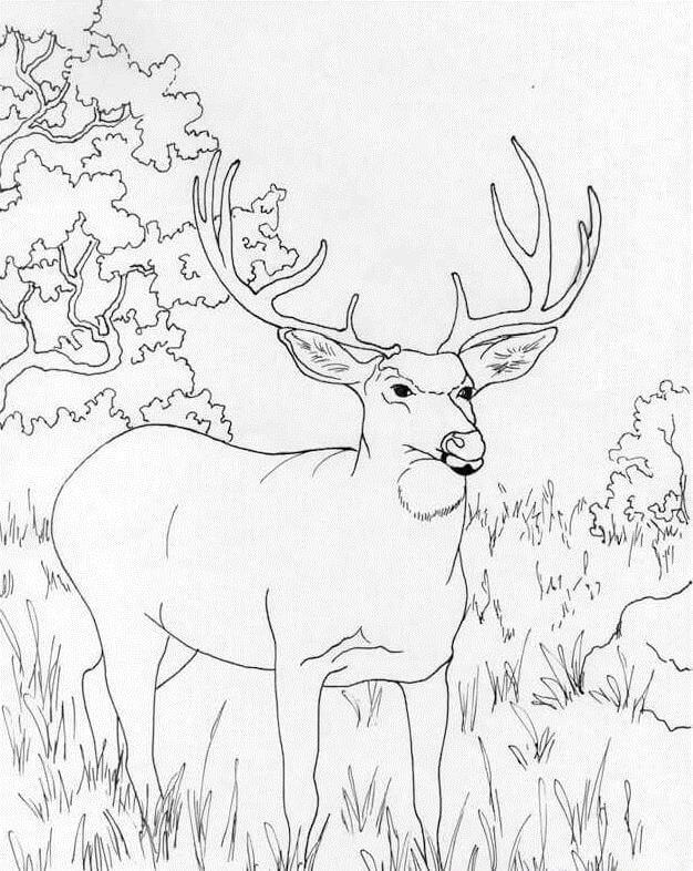 Wild Deer 6