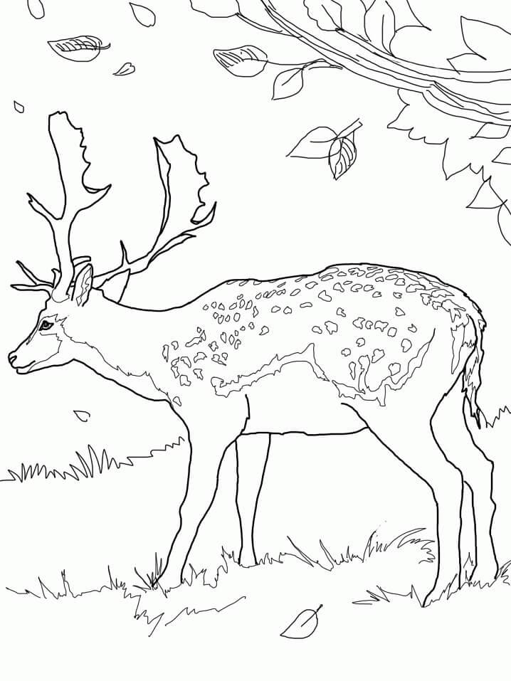 Wild Deer 7