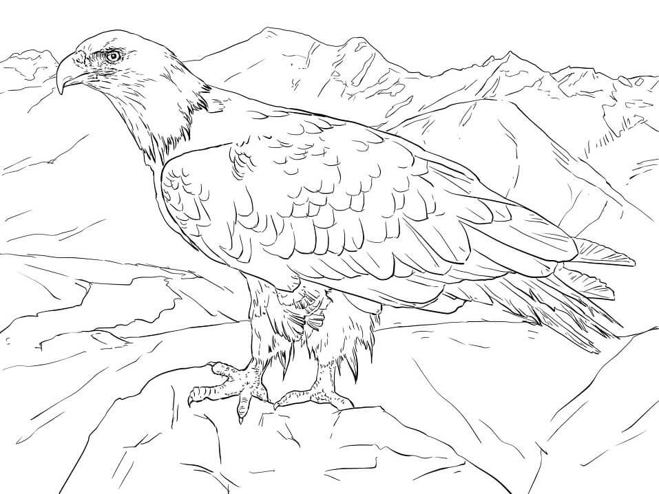 ald Eagle from Alaska